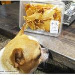 <台南美食>慢慢弄.餐點卻不馬虎.是寵物友善餐廳